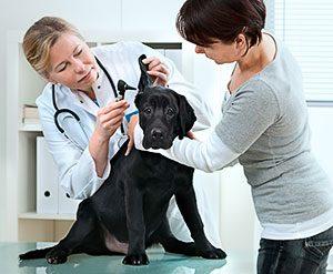 Use VALT for Veterinary Medicine